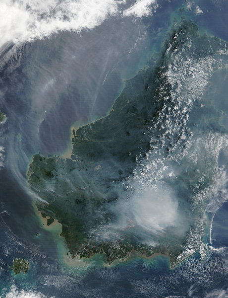 Satellite image of the island of Borneo on 19 August 2002, showing smoke from burning peat swamp forests. (NASA/GSFC)