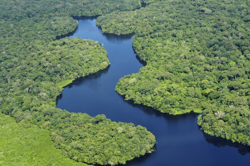 The Brazilian Amazon (Wikimedia Commons)