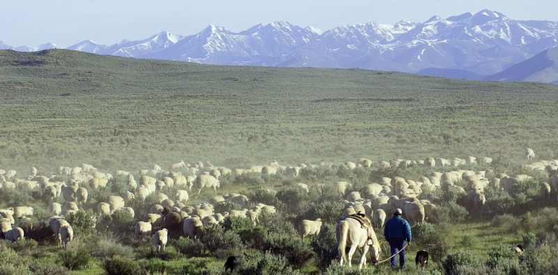 Western states have been at the forefront of debates about federal land management (BLM).