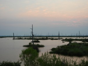 Gulf restoration - ELI Louisiana marsh