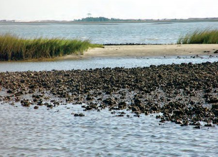 Gulf restoration - NOAA oyster bar