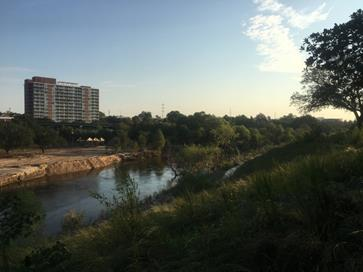 One of Buffalo Bayou's newest beaches, where erosion-preventing grass has begun to regrow.