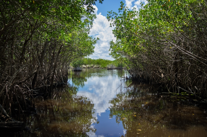 Mangrove, Everglades National Park, Florida (Vincent Lammin)