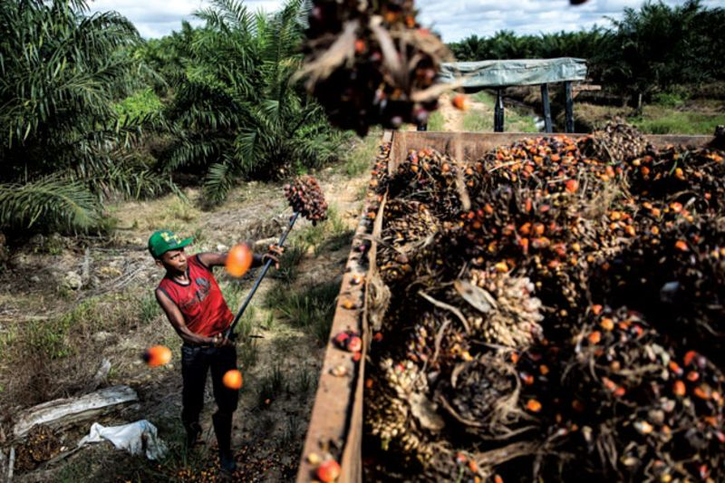 The palm oil industry is notorious for deforestation and human rights abuses such as forced and child labor - an instance where environmental outcomes are closely tied to the labor and land practices of businesses. (Photo: Kumal Jufri)