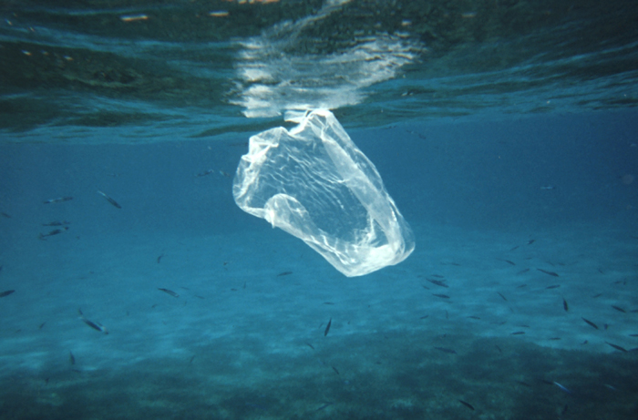 Plastic bag or jellyfish? There will be more plastic than fish in the ocean by 2050, research suggests (NOAA).