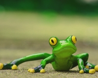 Are frogs better than humans at responding to slow threats?