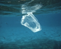 Plastic bag or jellyfish? Research suggests there will be more plastic than fish
