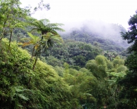 Restoration of forests is one promising approach to carbon dioxide removal.