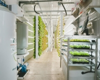 Vertical Roots aeroponics system (Photo: Vertical Roots).