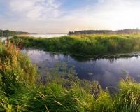 Wetlands, Svetlana Makarova